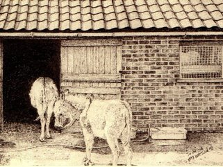 Donkey, pencil drawing Image.