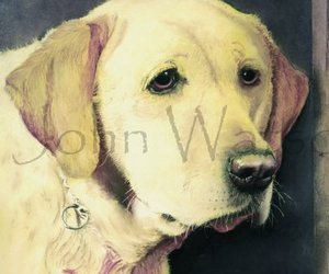 Labrador  (pastel drawing)
