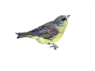 Greenfinch Image.